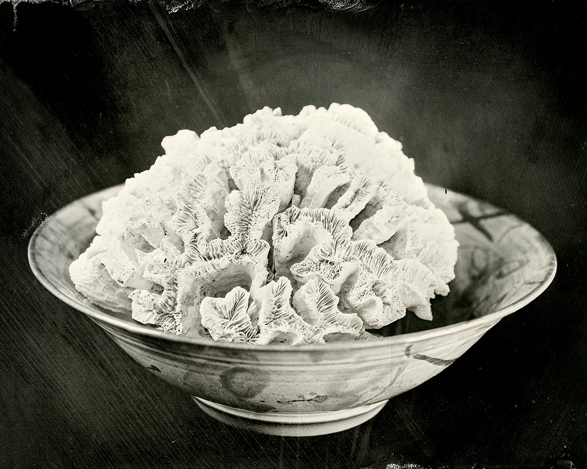 Coral in Bowl, 2018