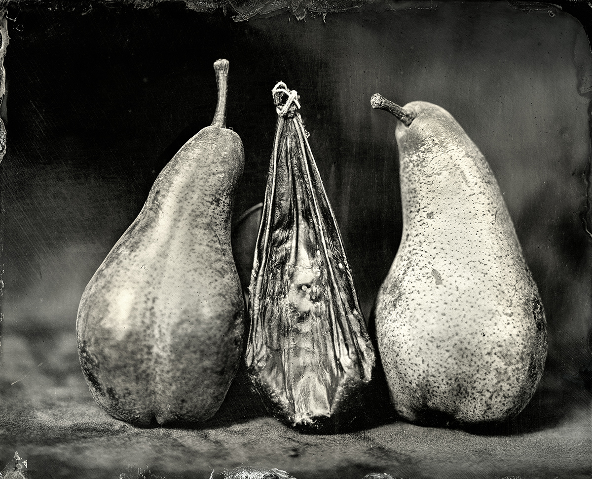 Bear Gallbladder with Bosc Pears, 2018