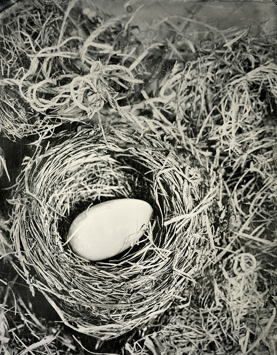 Ivory Egg in Nest, 2018