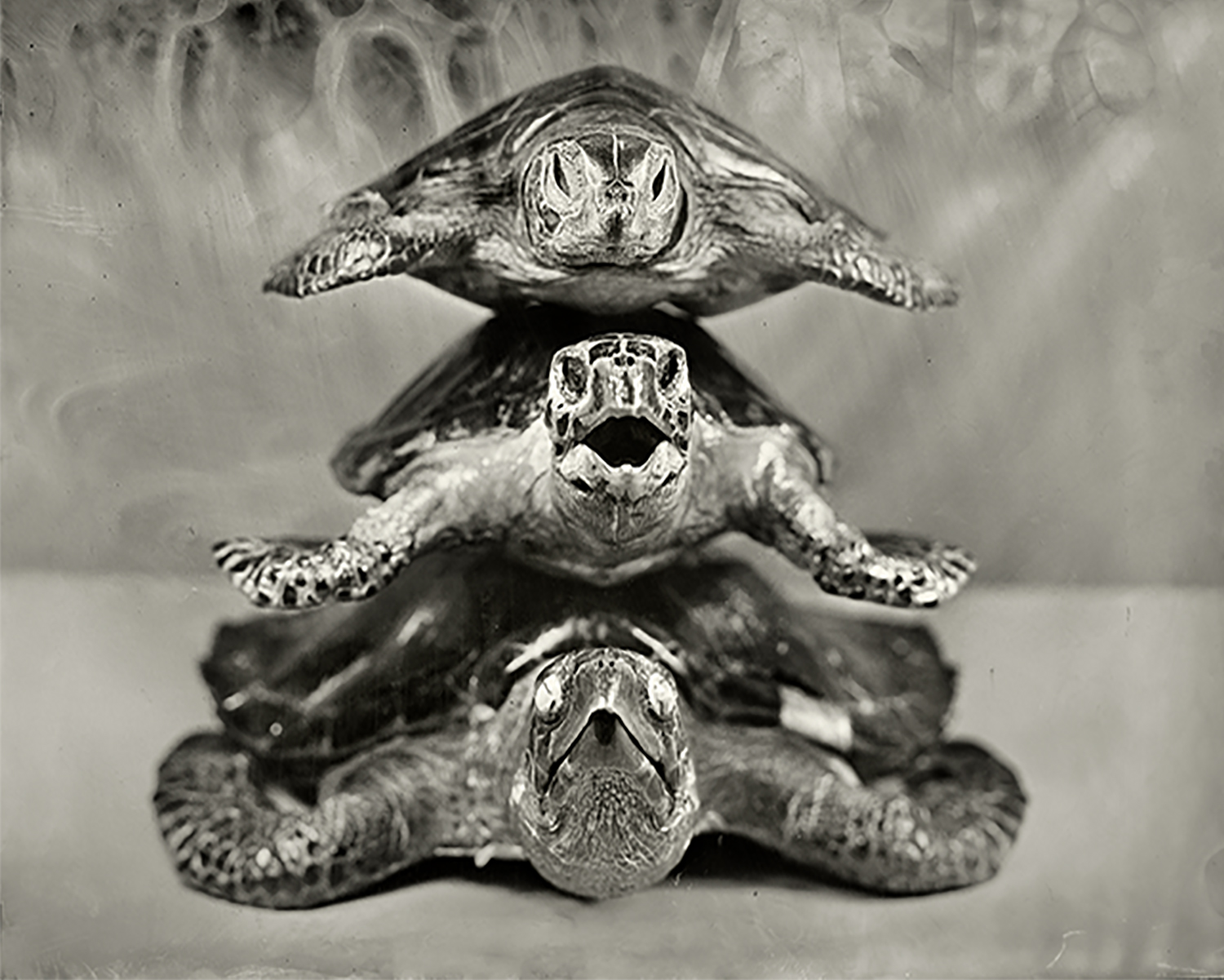 Stacked Turtles, 2018