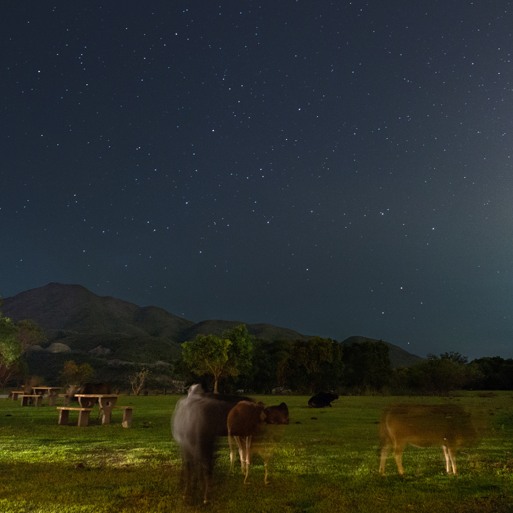 cows-stars.jpg