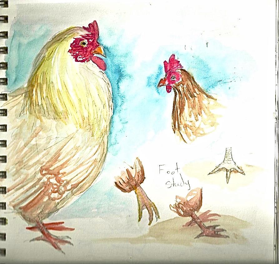 Chicken2.jpeg