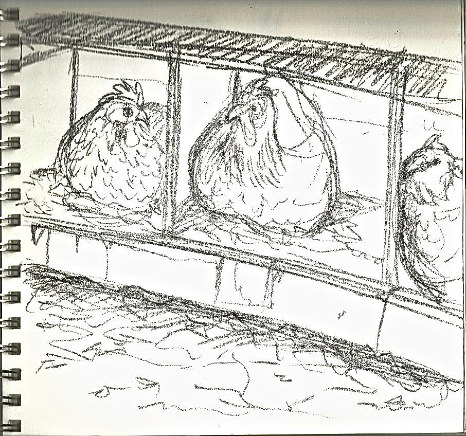 Chicken3.jpeg