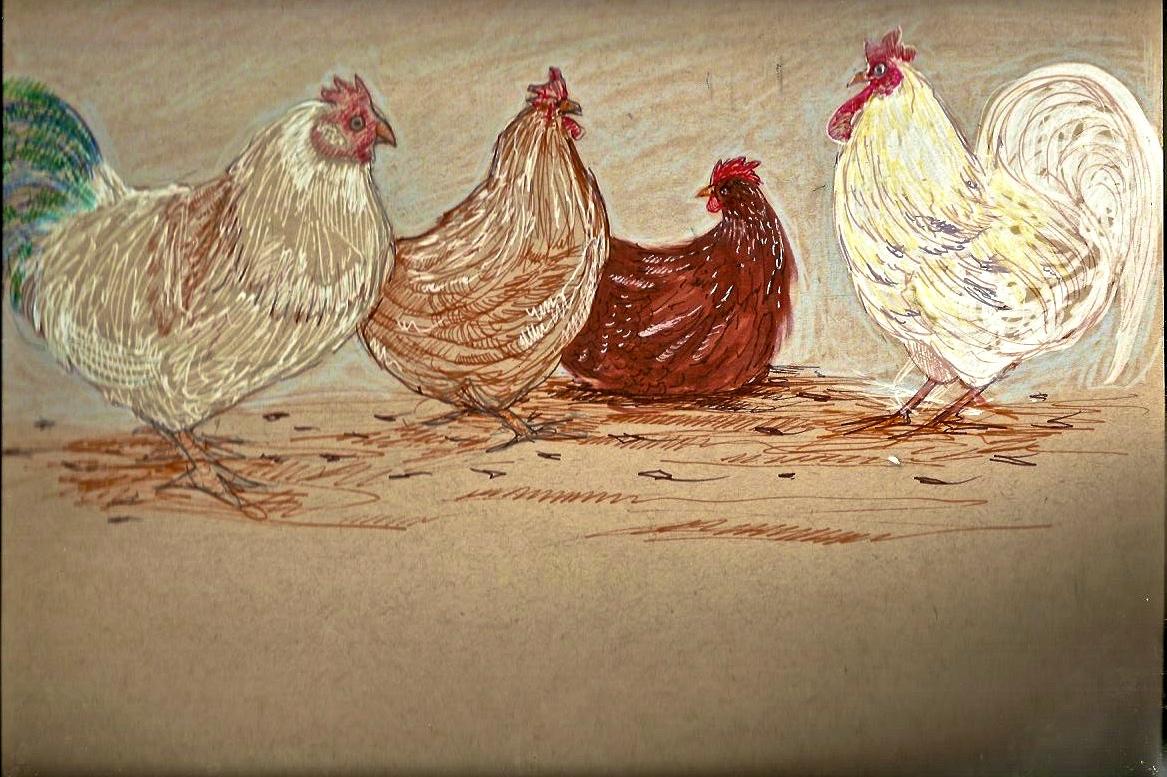 Chicken5.jpeg