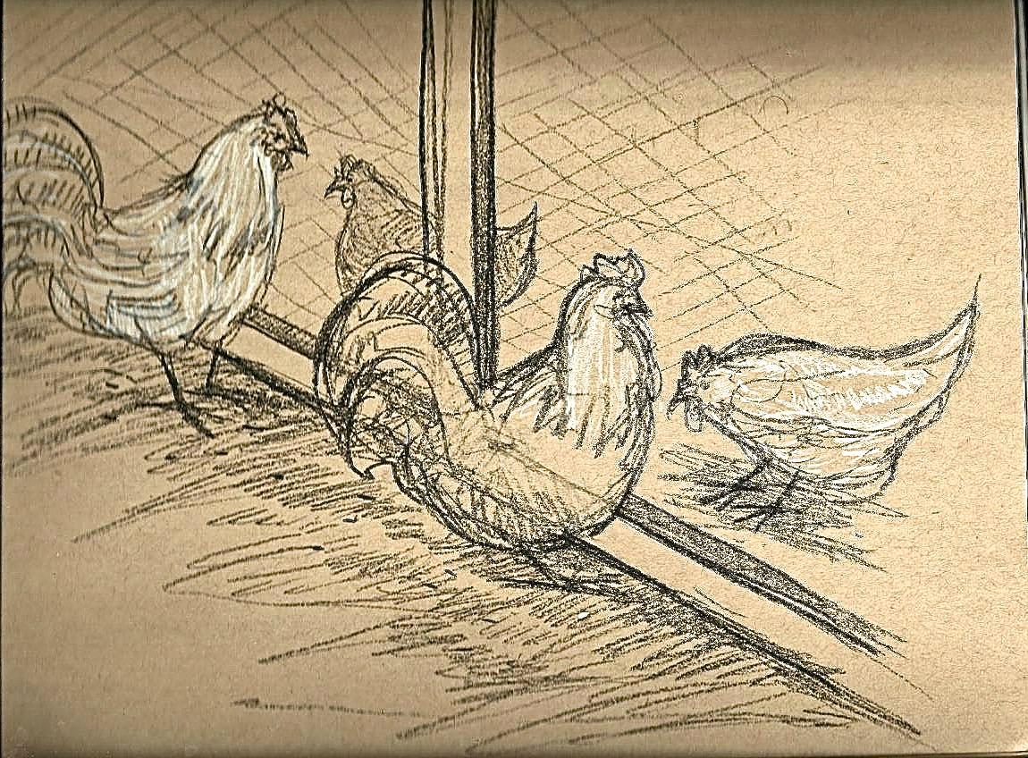 Chicken6.jpeg