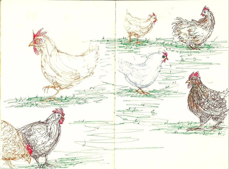 Chicken7 1.jpeg