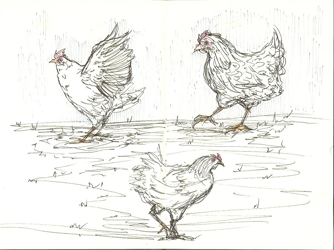 Chicken9.jpeg