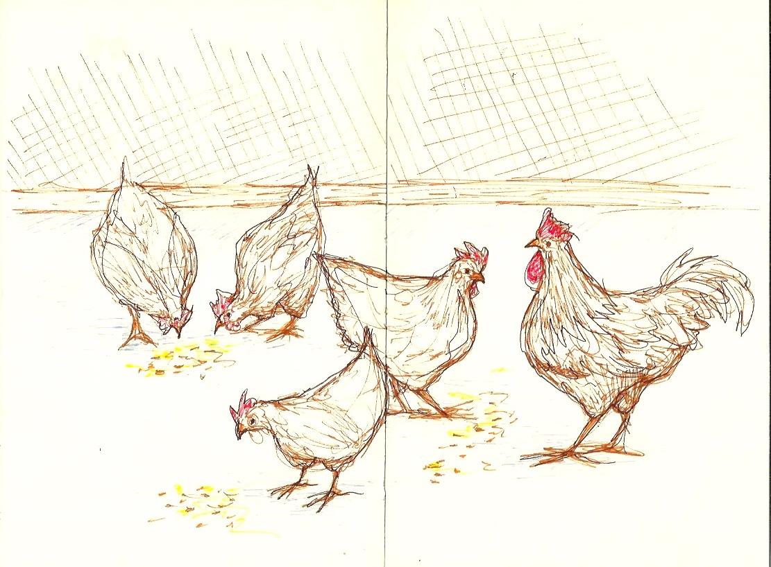 Chicken10.jpeg
