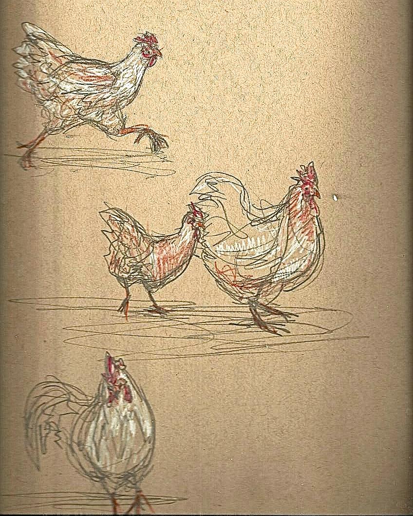 Chicken8.jpeg