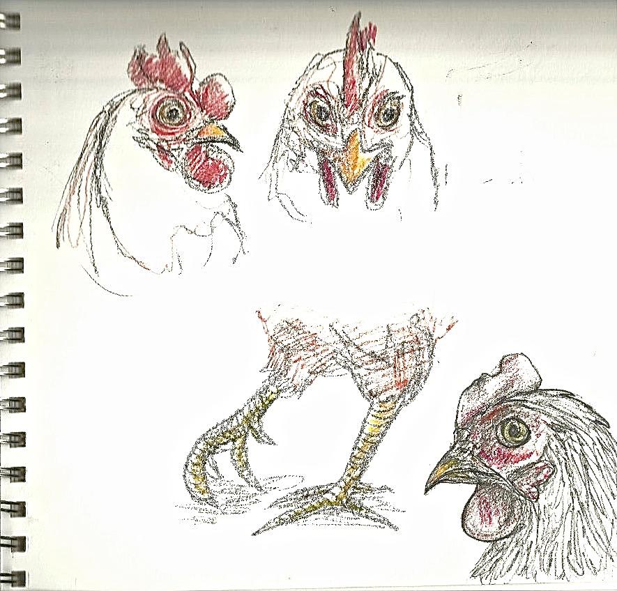 Chicken4.jpeg