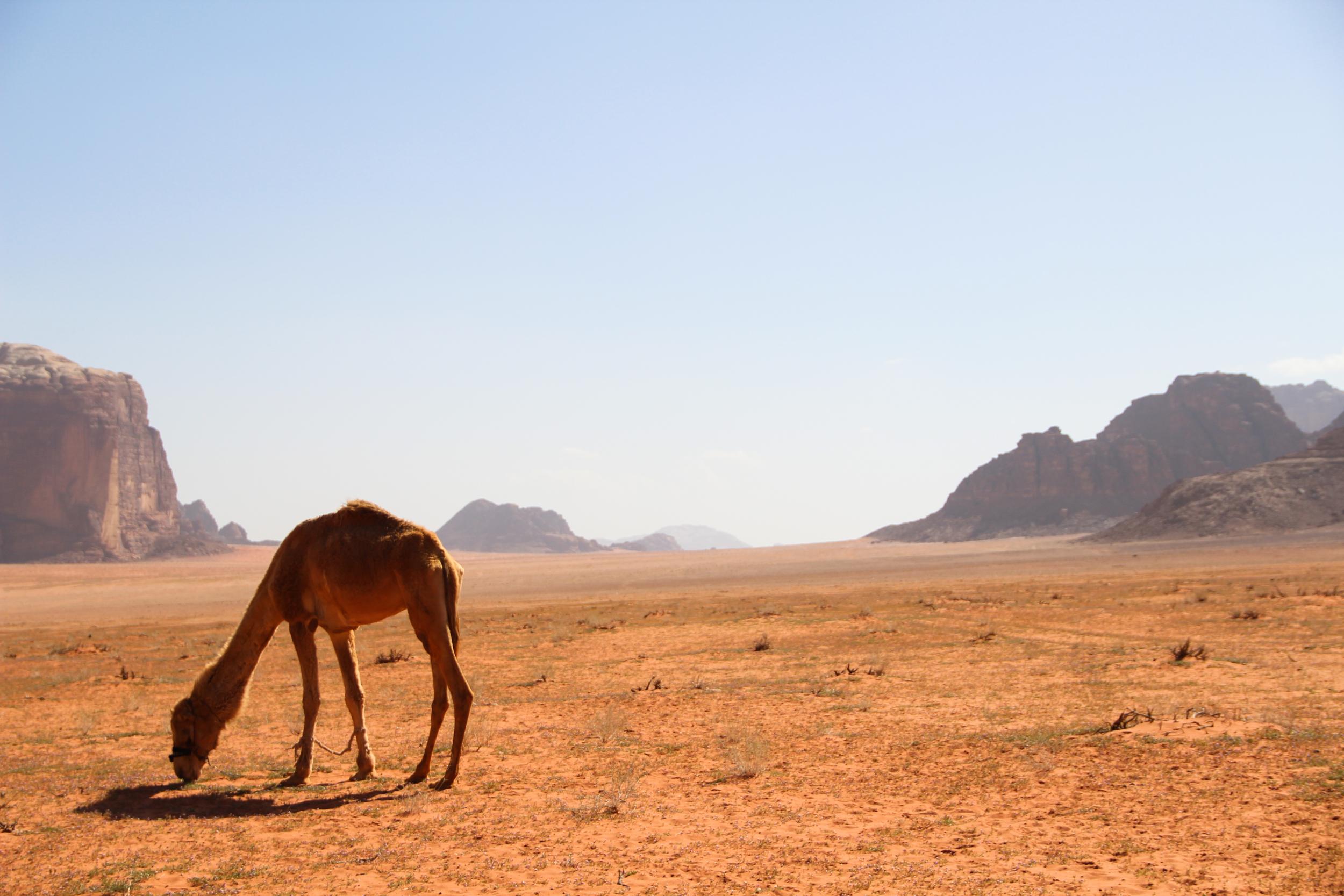Wadi Rum, March 2014