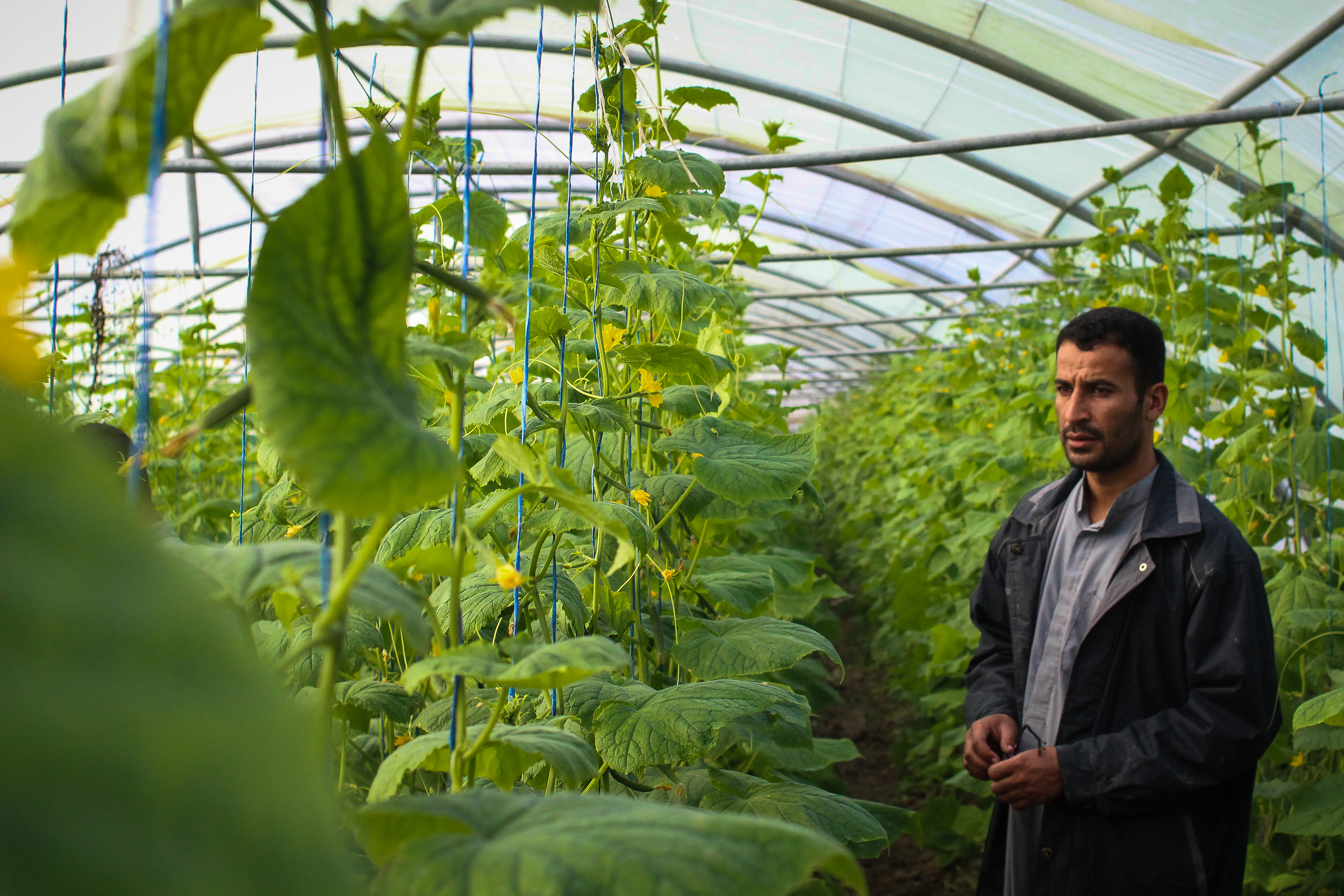 A greenhouse in Bagdhad / For the Iraq mission of the International Organization for Migration