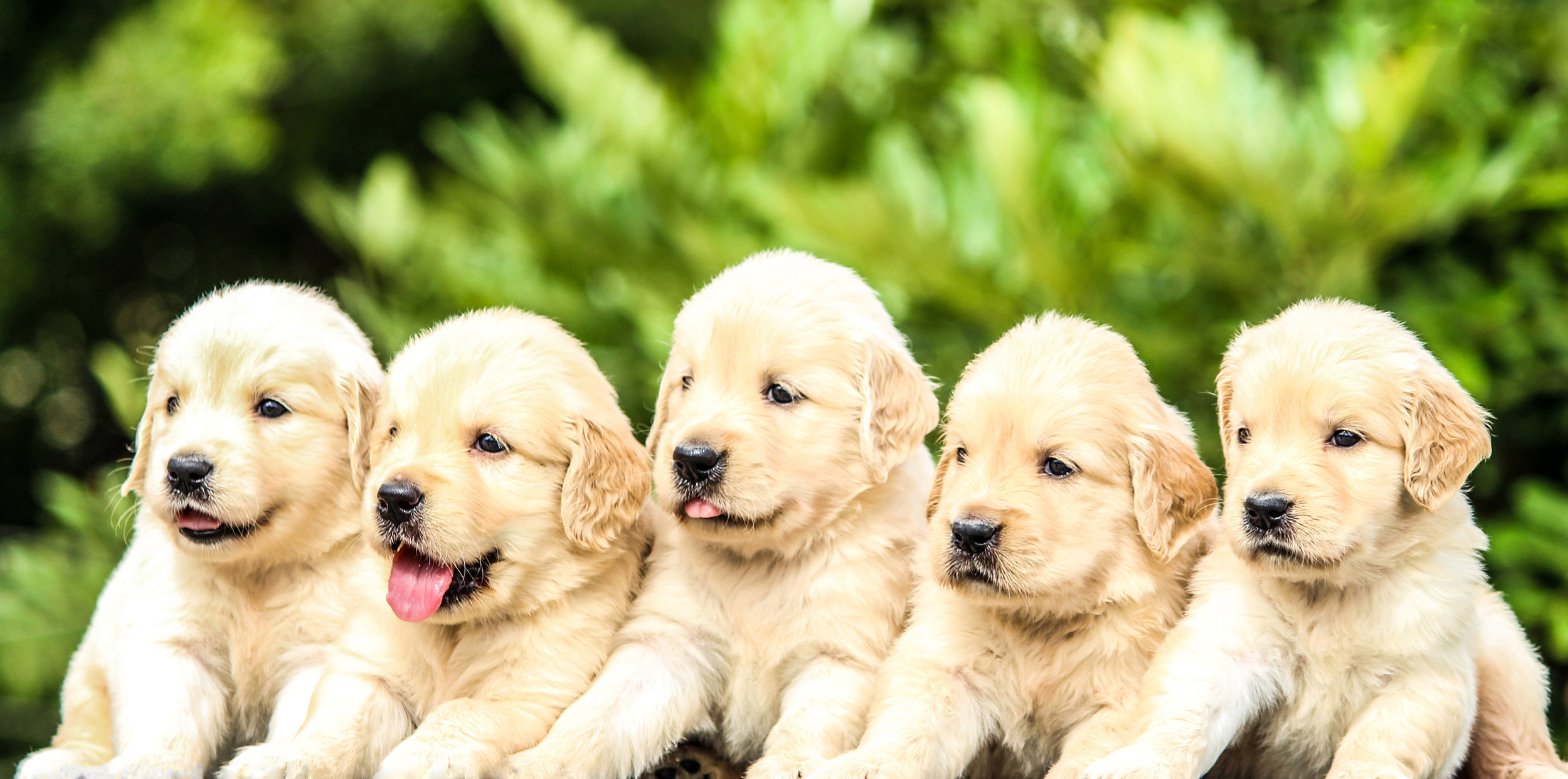 Avoid getting puppies from the same litter -