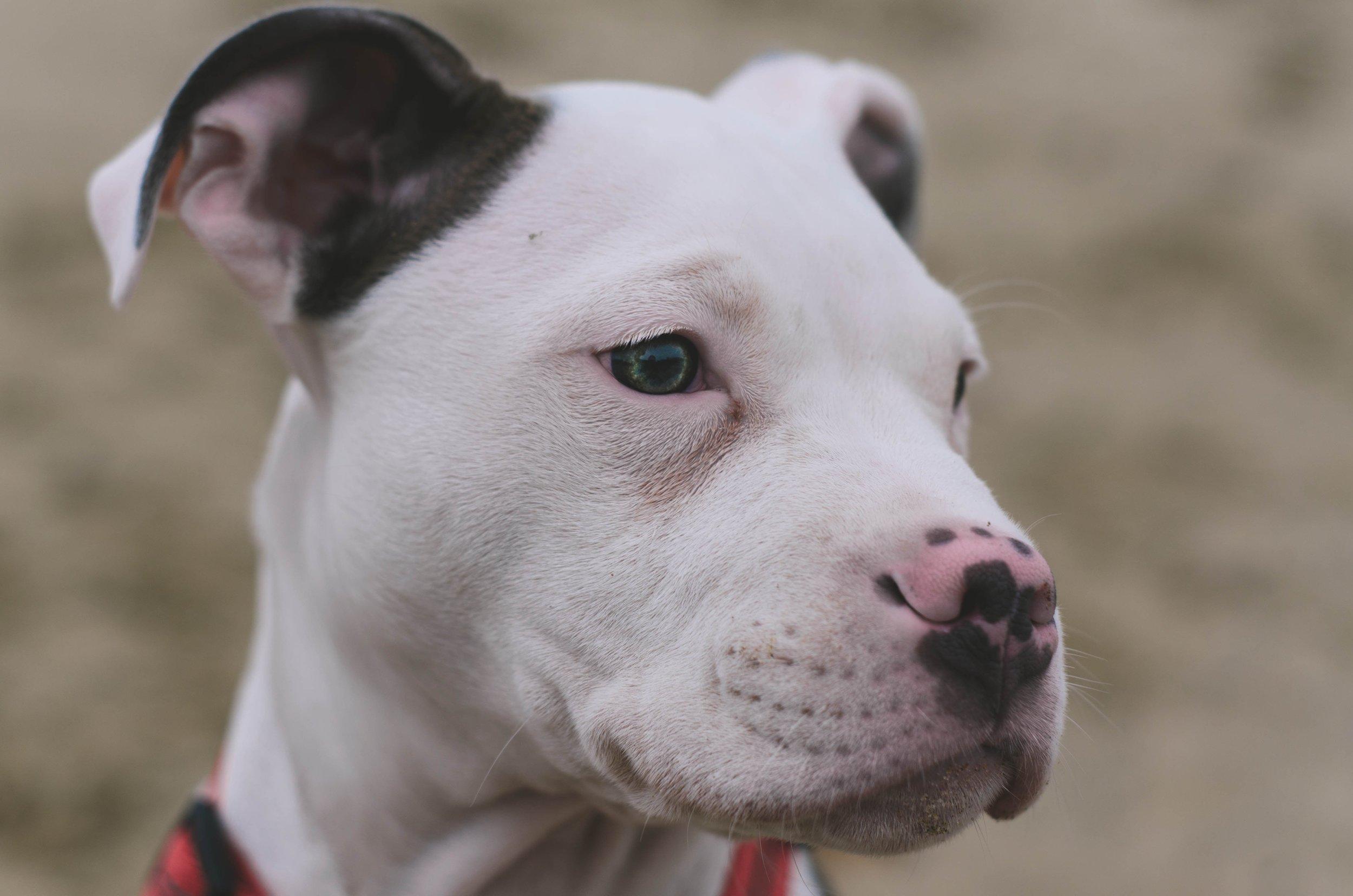 Love alone cannot rehabilitate a dog -
