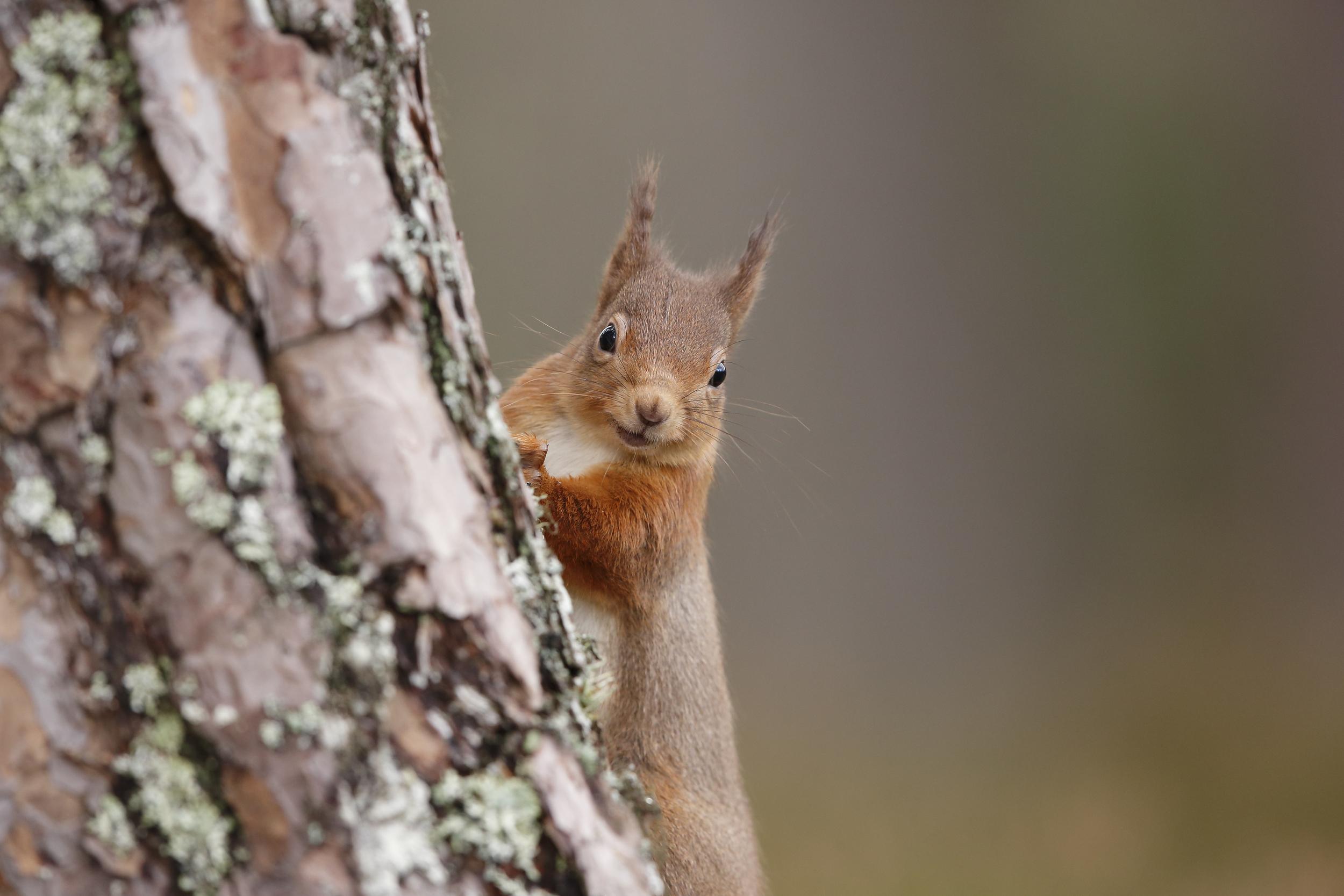Squirrel portrait.jpg