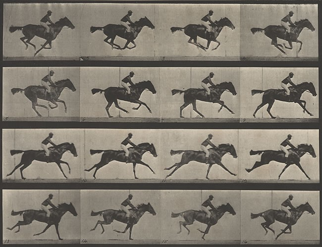Figure 1  Horse in Motion , Edward Muybridge, ca. 1886. Photography collection, Harry Ransom Center.