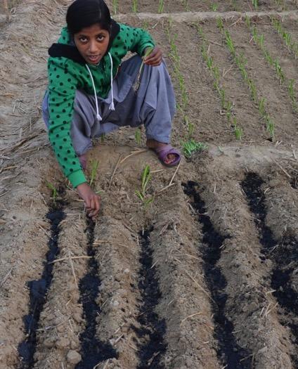 Application of biochar to crops