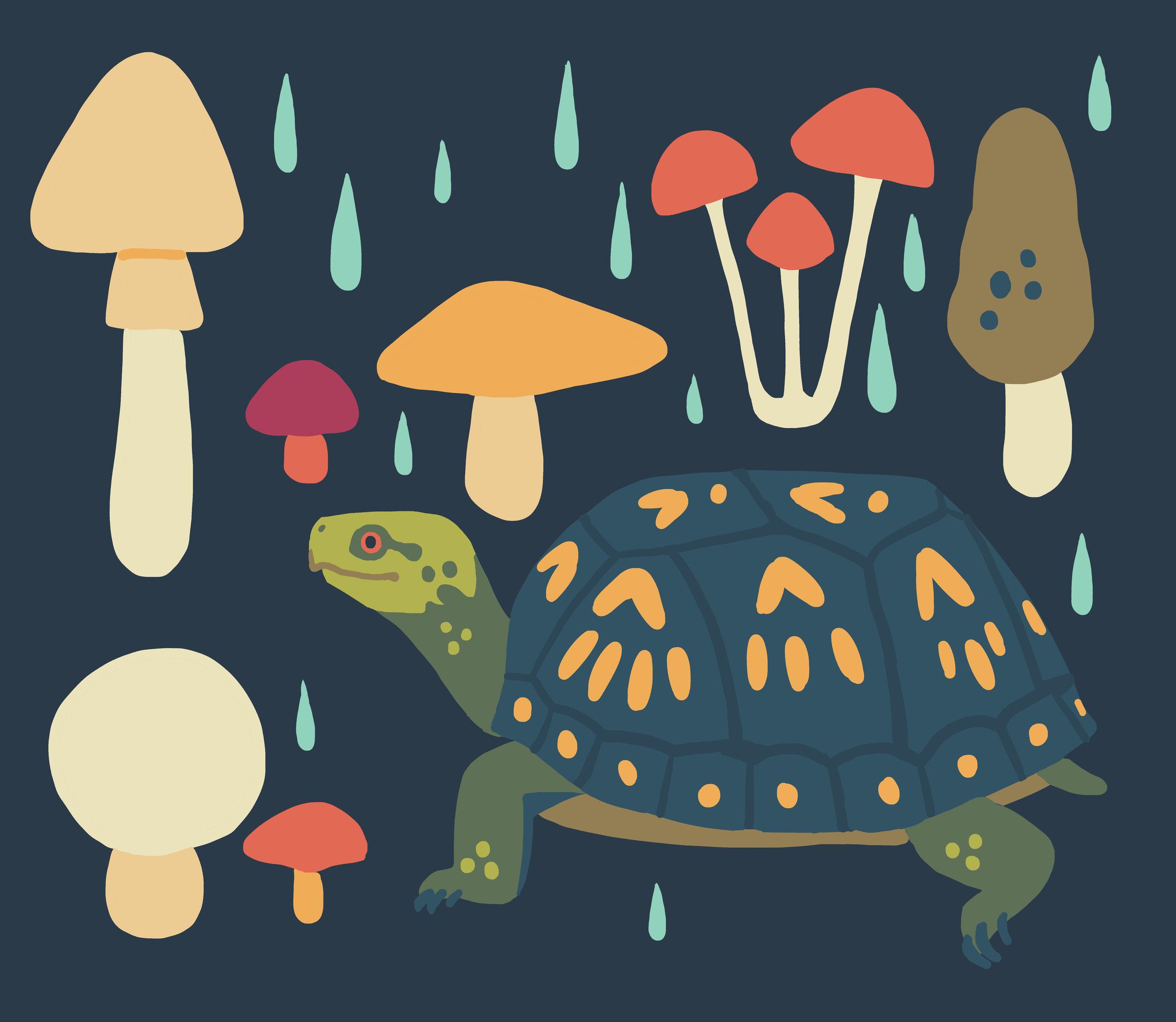 panel_easternboxturtle_mushrooms.jpg