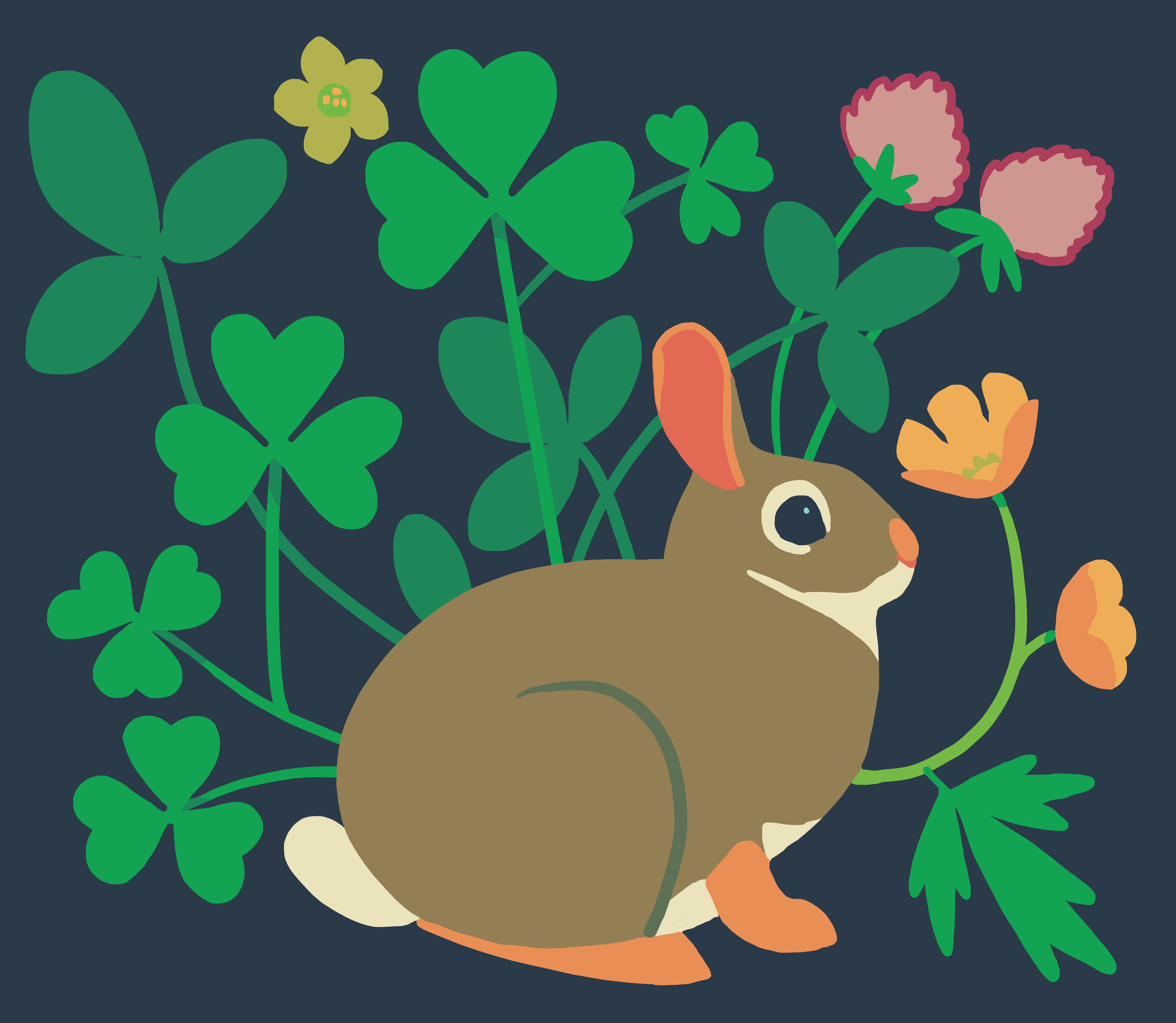 panel_easterncottontail_woodsorrel_redclover_buttercup.jpg