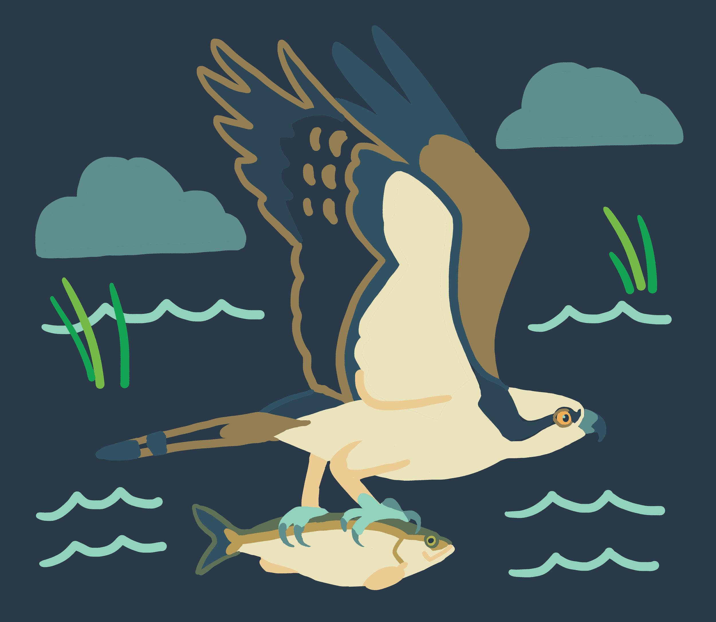 panel_osprey_fish.jpg