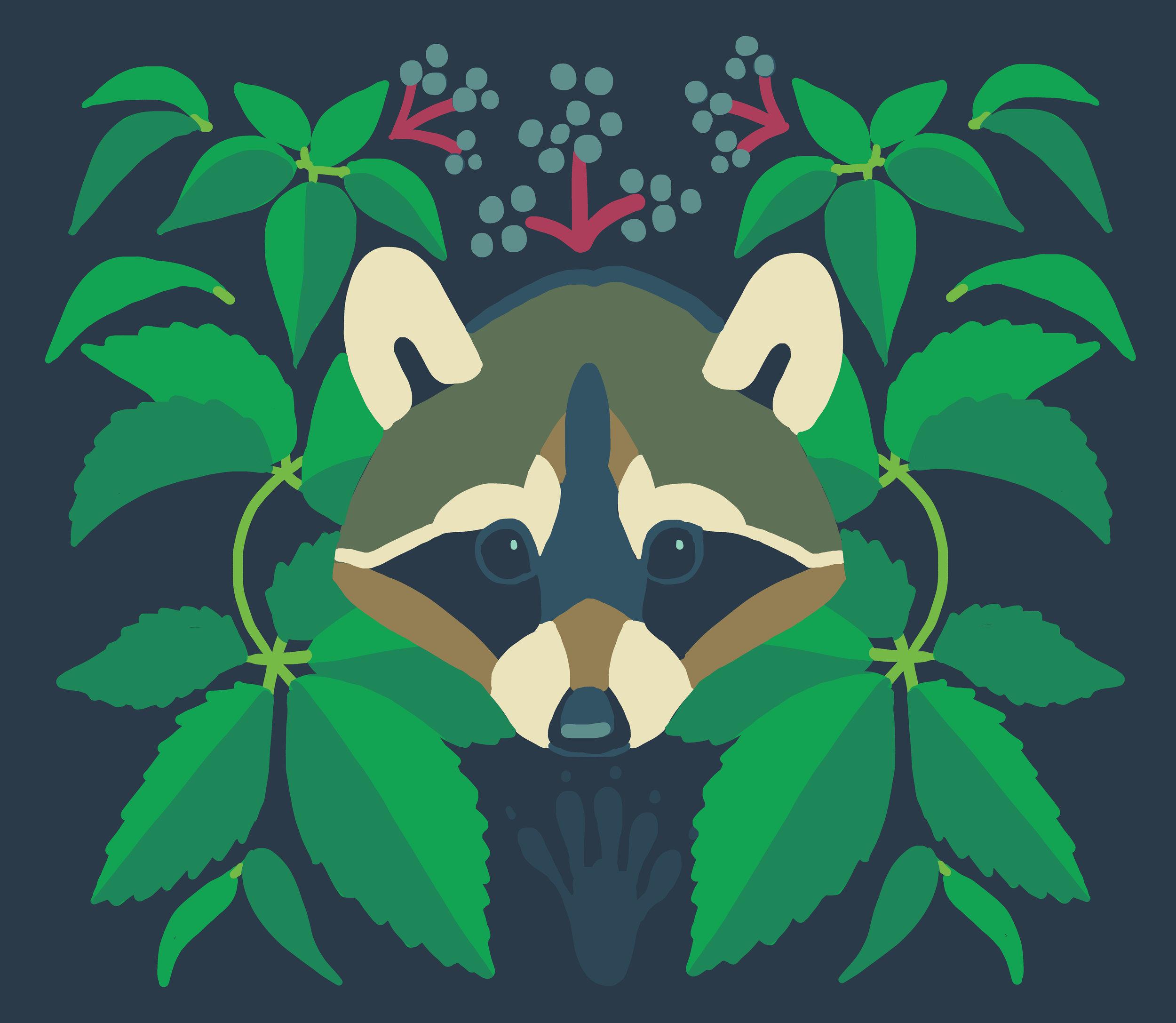 panel_raccoon_virginiacreeper.jpg