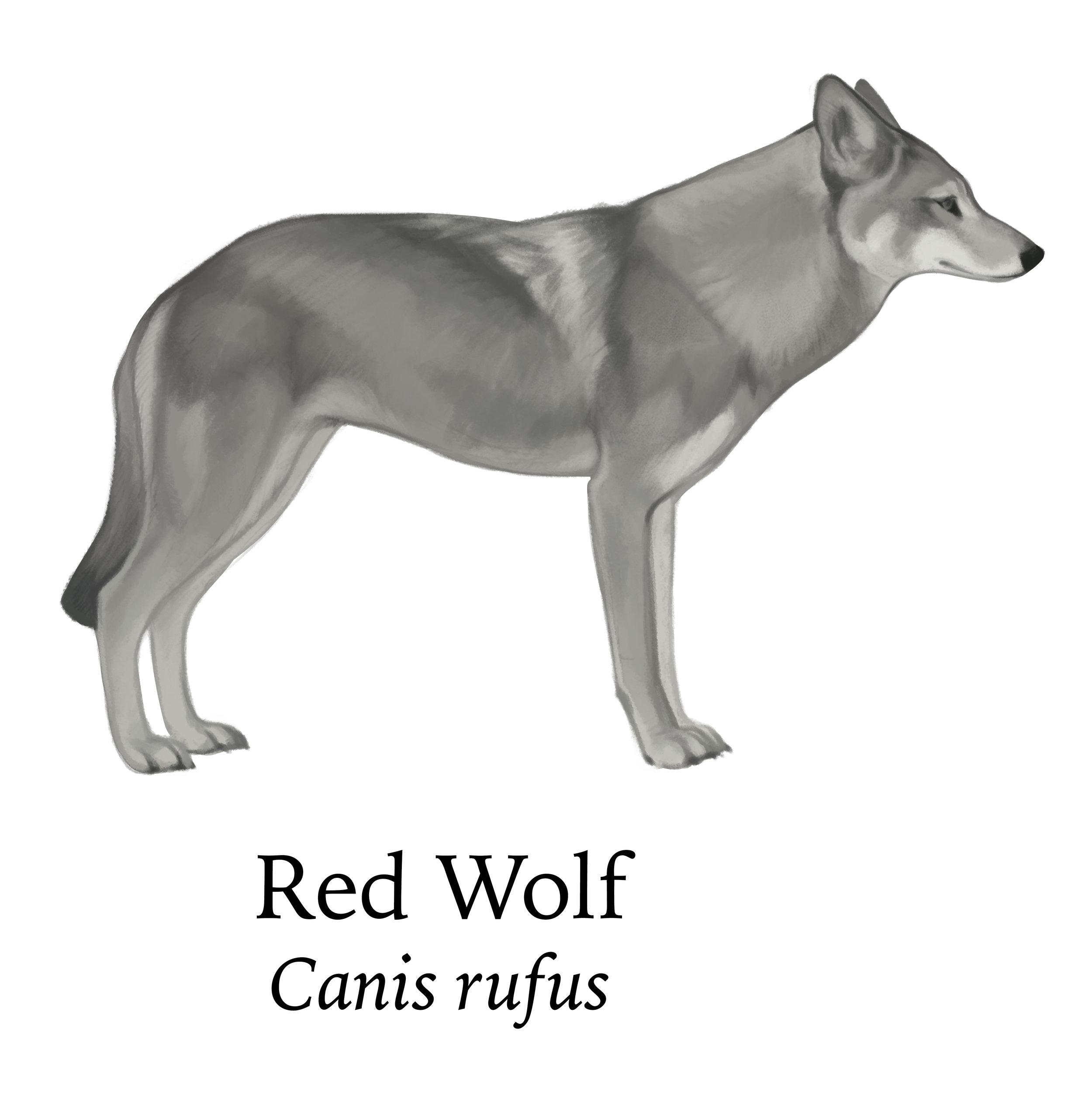Crop_redwolf.jpg