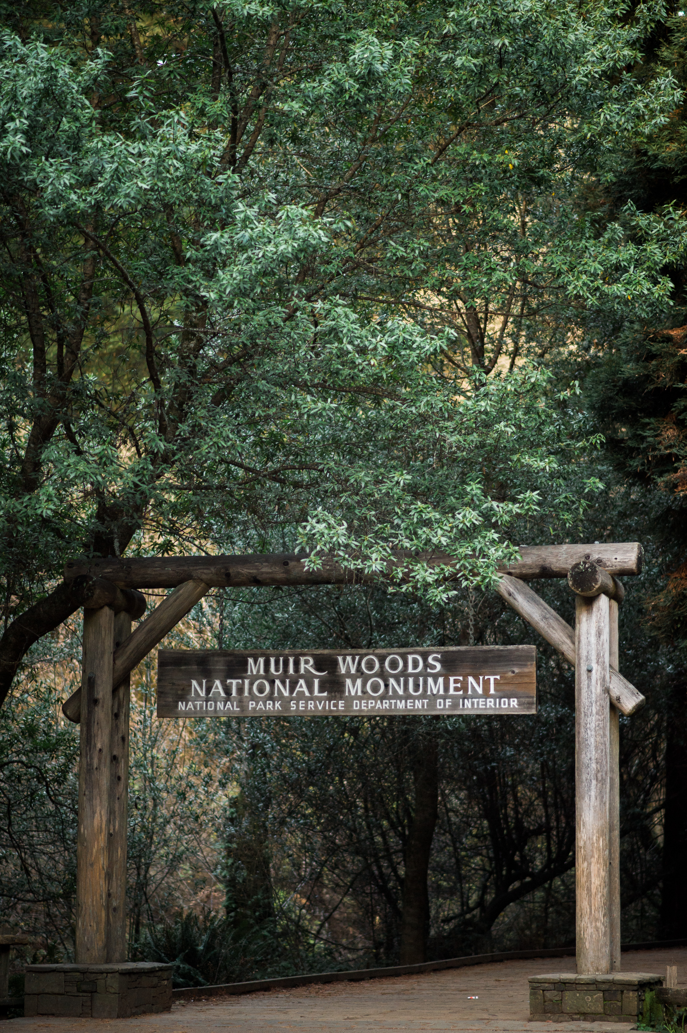 Muir Woods San Francisco Engagement, CA Wedding Photographer   Jennifer Lourie