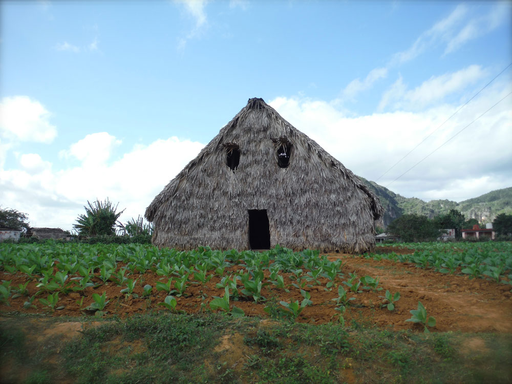 bike-tour-cuba-palapa-farm.jpg