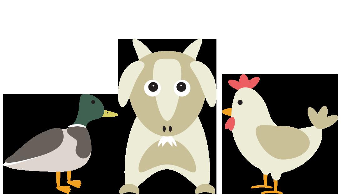 Duck, Goat, & Chicken Food