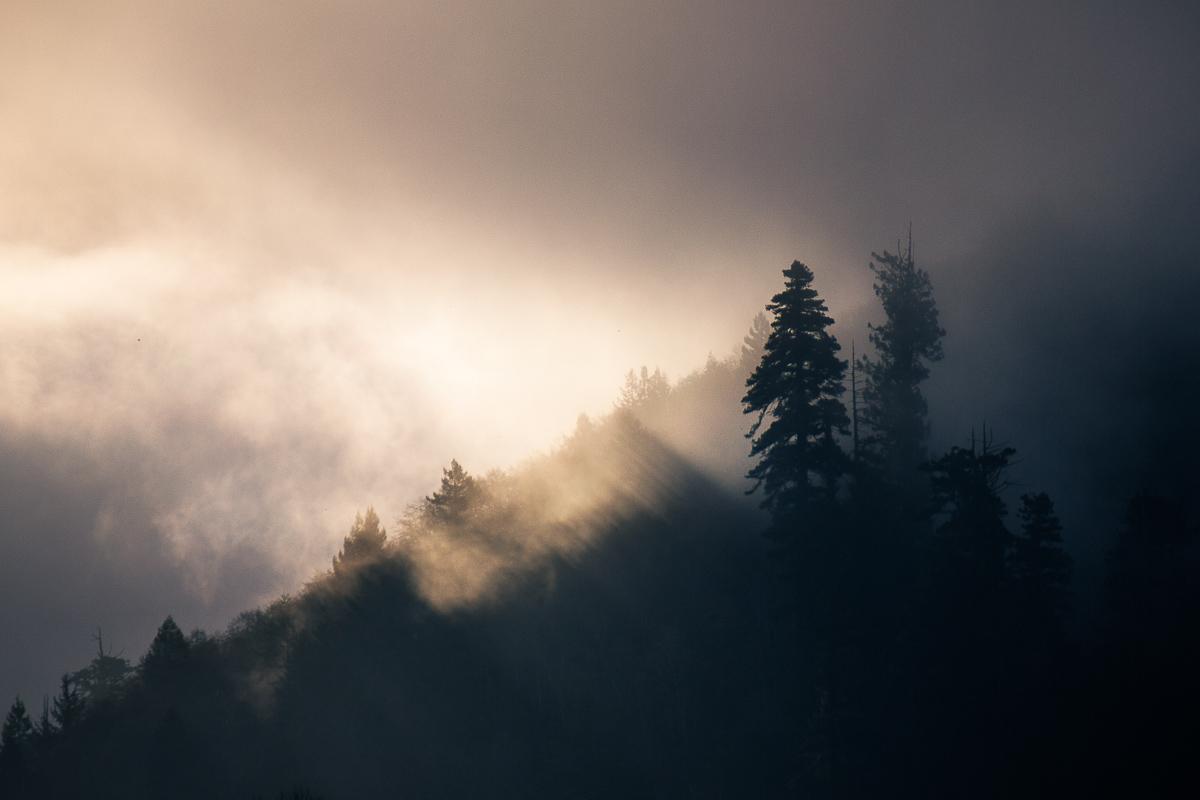 redwood_klamath_sunrise_schedler.jpg