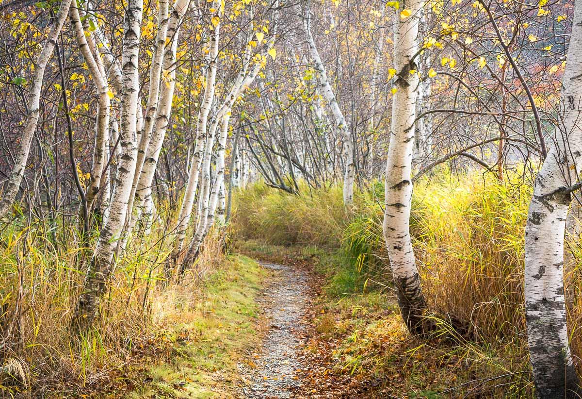 acadia_barHarbor_fall_leaves.jpg