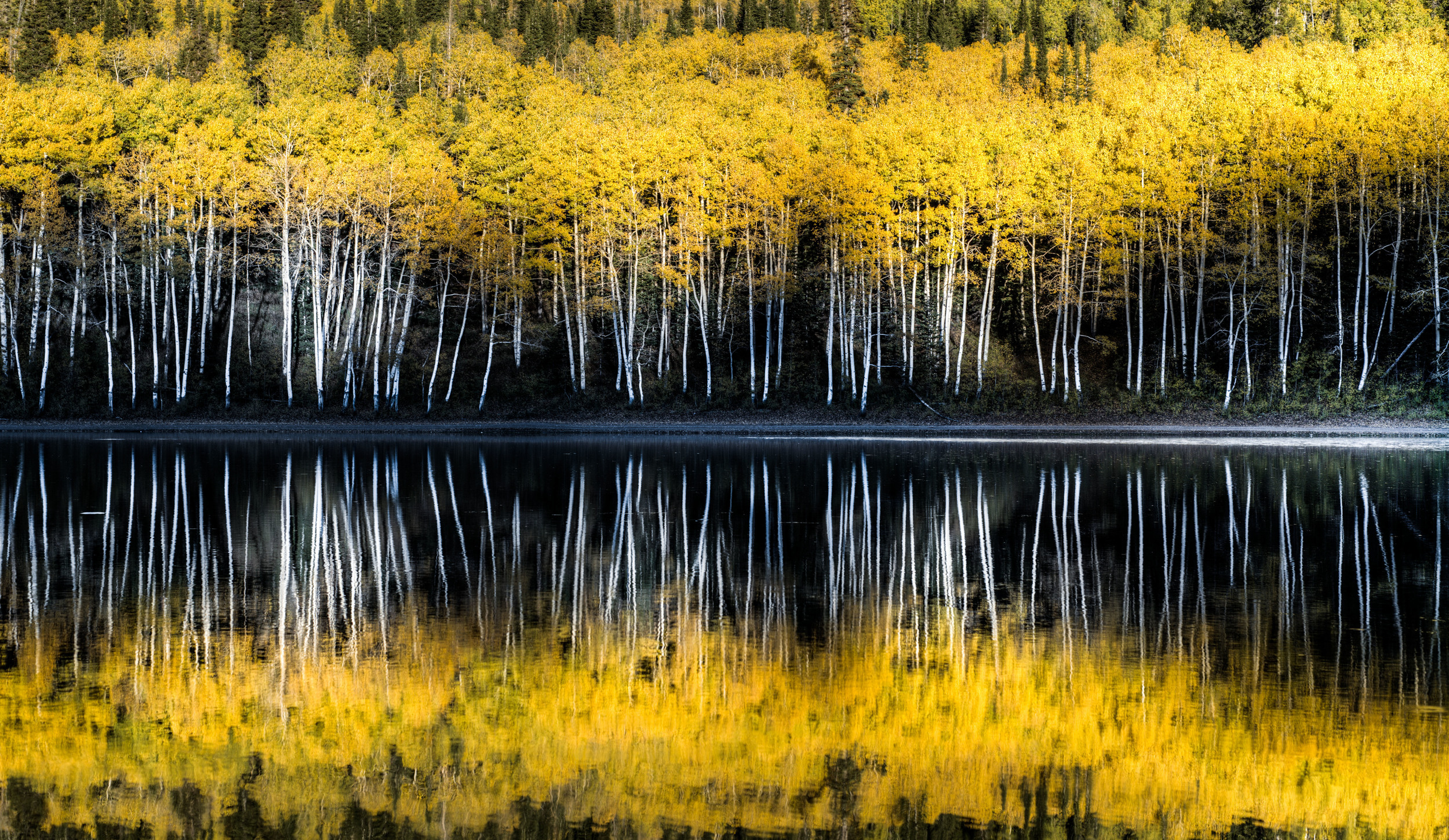lake reflection trees kasey crook thisworldexists