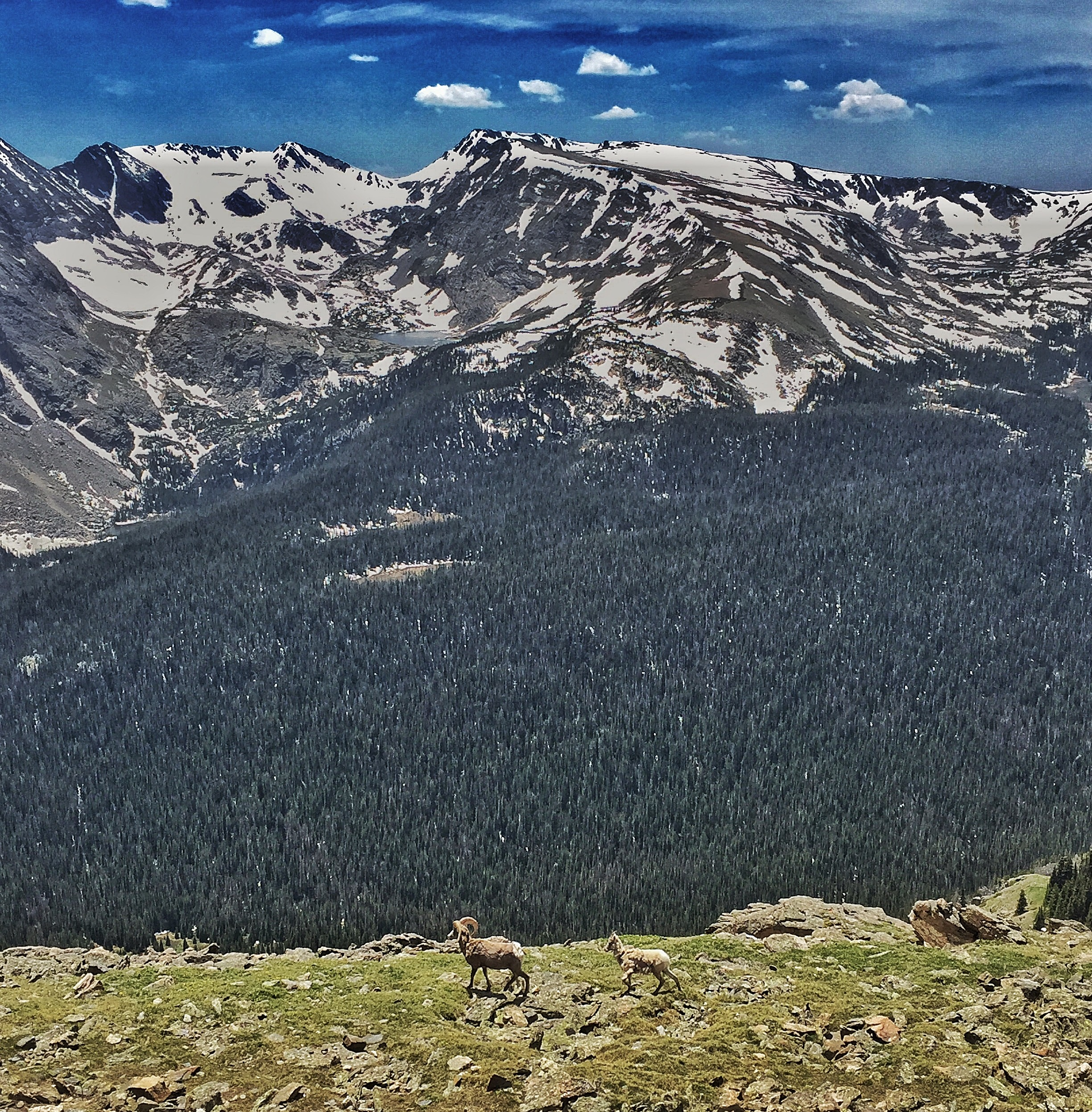 trail ridge road colorado thisworldexists this world exists