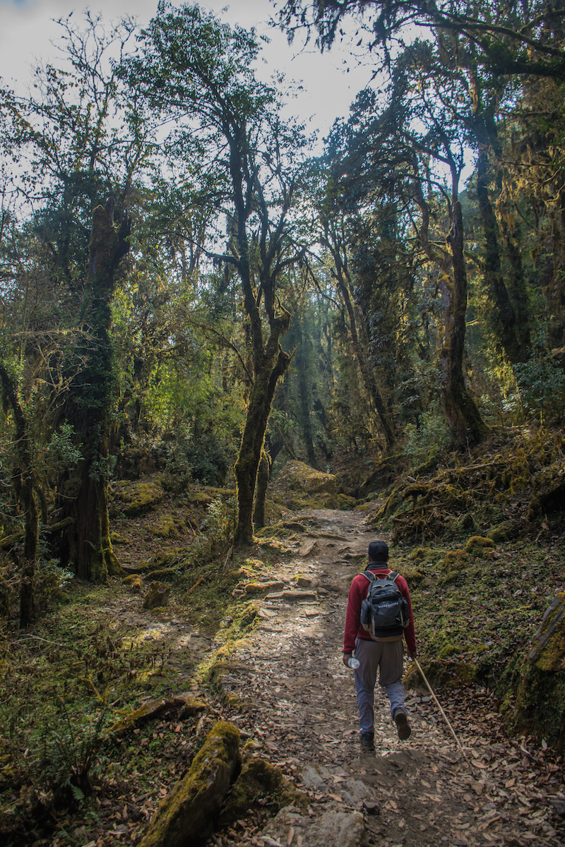 nepal hike hiking thisworldexists this world exists Forest trekking