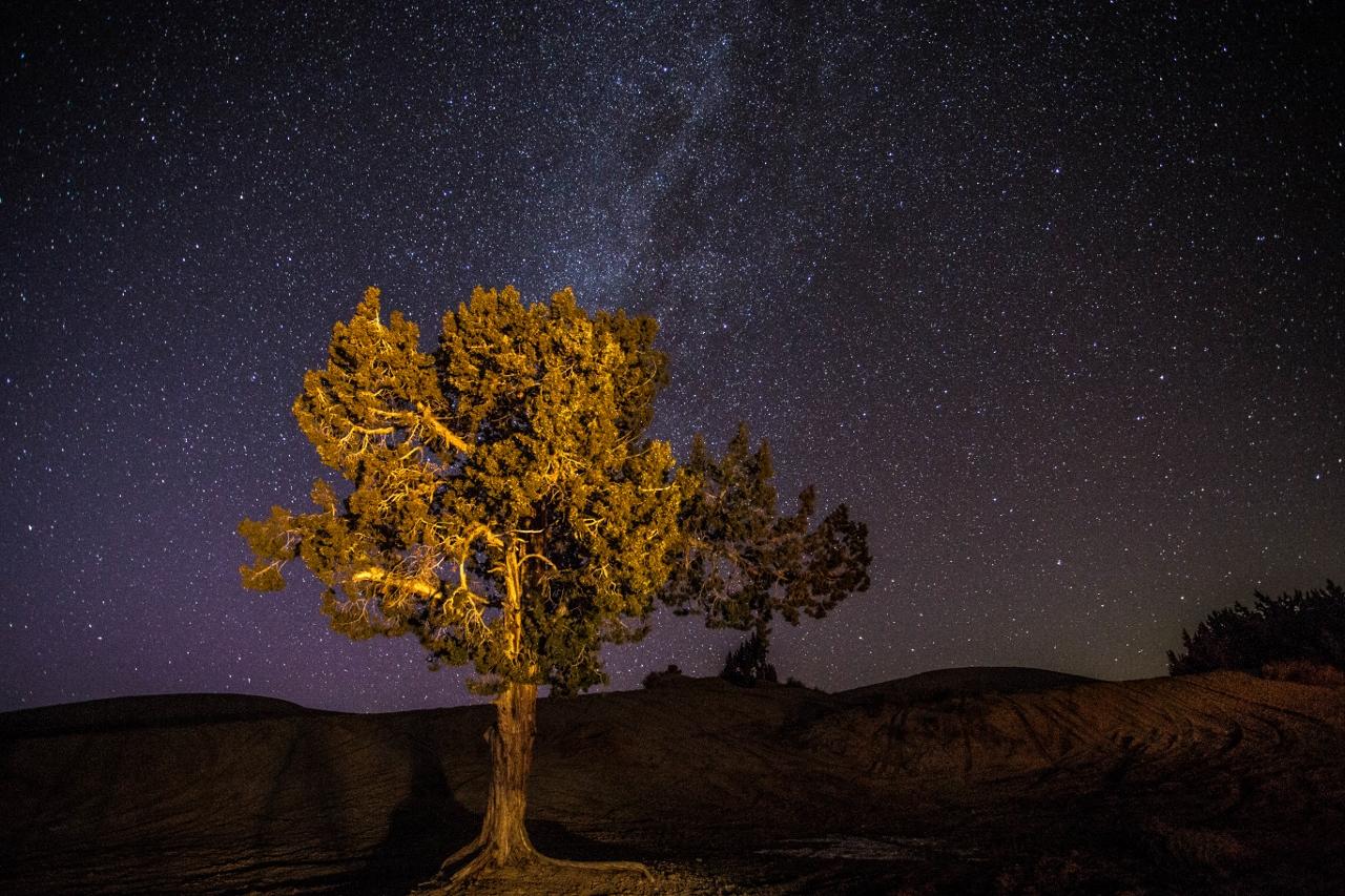 Juniper tree at Little Sahara.  Photo: Dean Chytraus