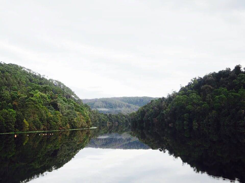joe park tarkine tasmania australia thisworldexists this world exists