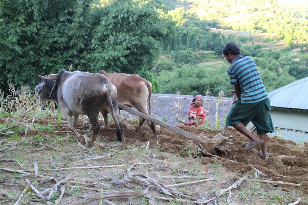 THISWORLDEXISTS Nepal volunteer education