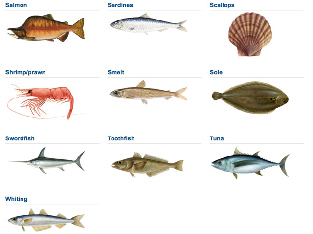 Illustrations: www.thegoodfishguide.org