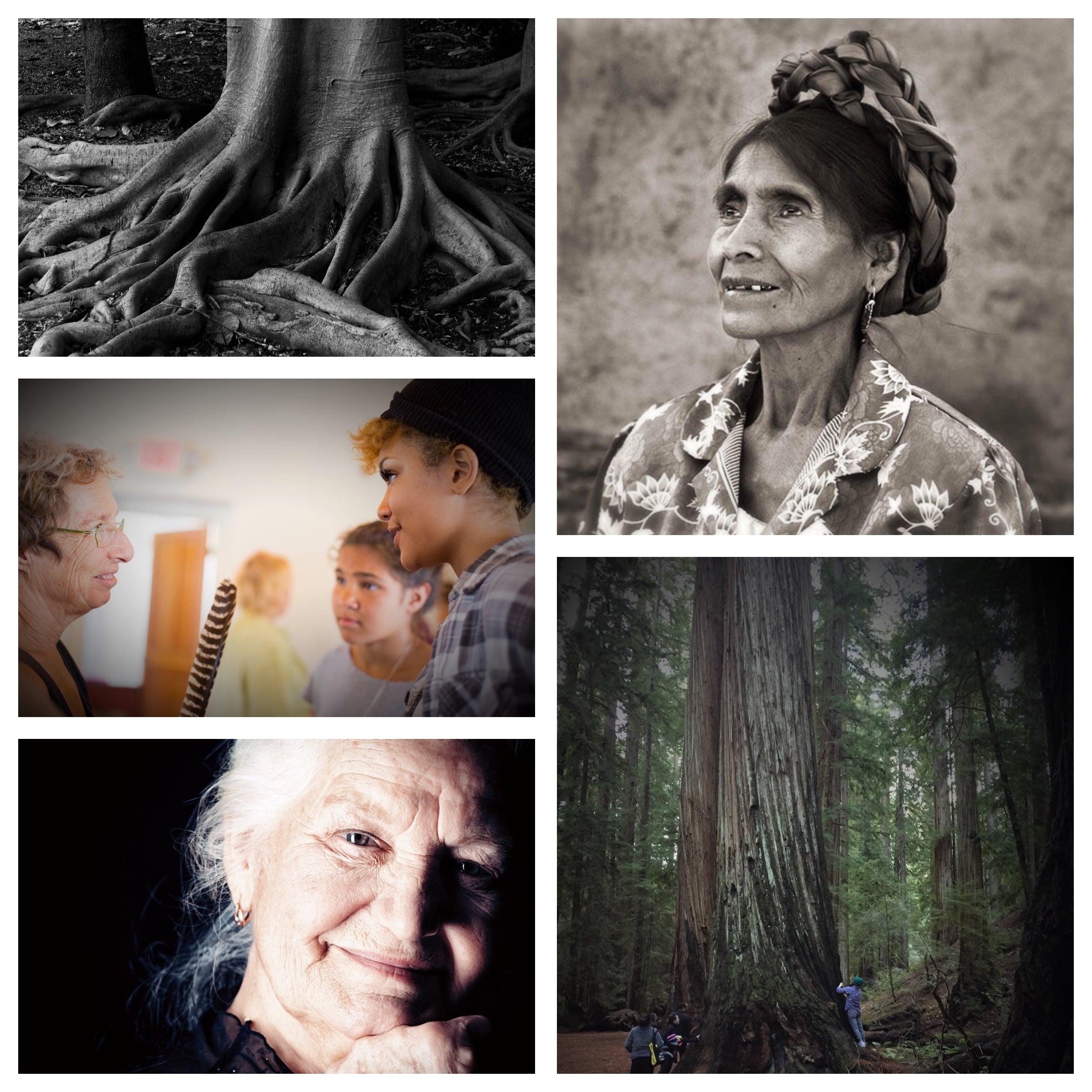 Elder collage.jpg