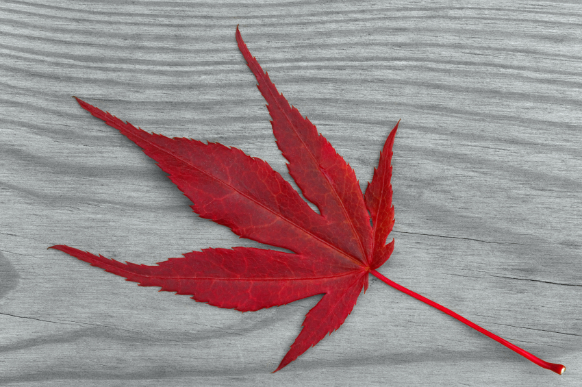 One leaf photo.jpg