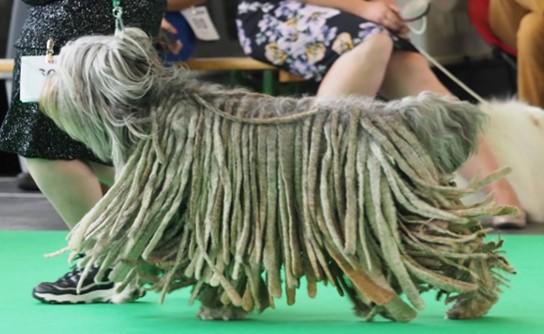 European Dog Show Brussels (Belgium) under Judge Christian Stefanescu