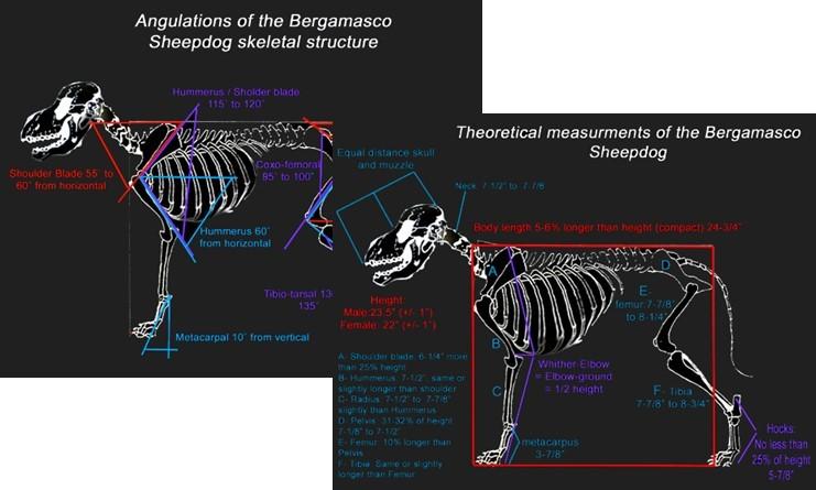 !2 Skeletons.jpg
