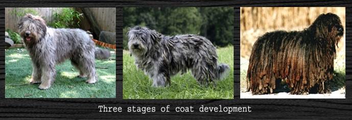 !2 Coat.jpg