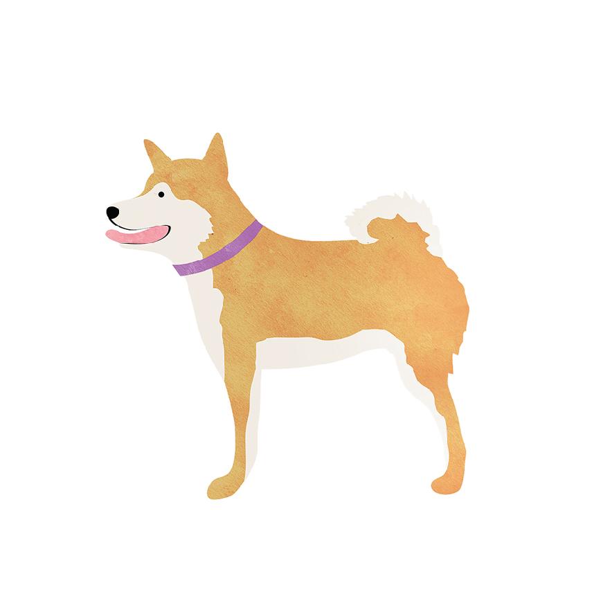 jenniferha_dog_illustrations.jpg