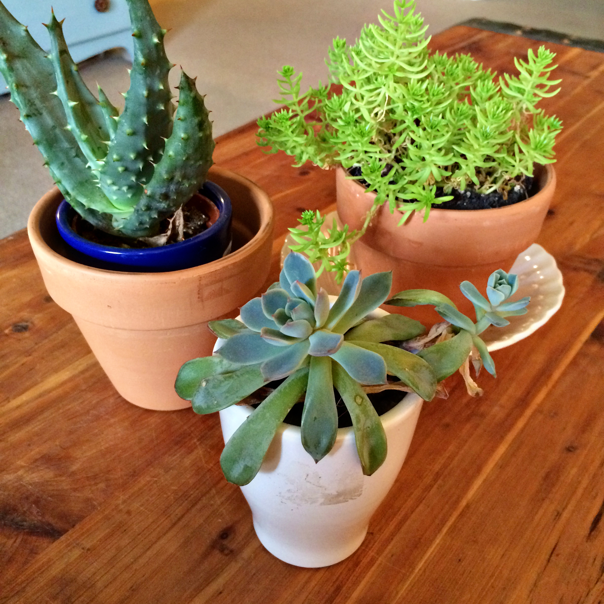 House plants for an office space