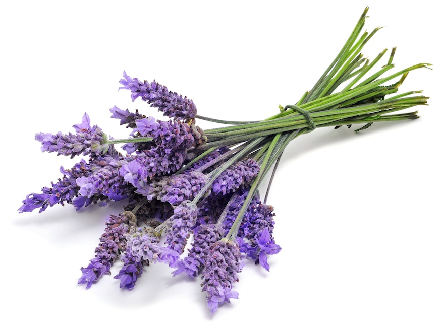 Lavender Buds and Essential Oil (USDA certified organic)