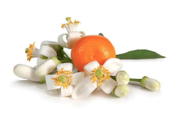 Neroli (Bitter Orange Blossom) Hydrosol