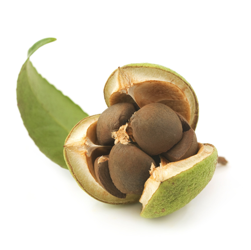 Camellia Seed Oil (USDA certified organic)