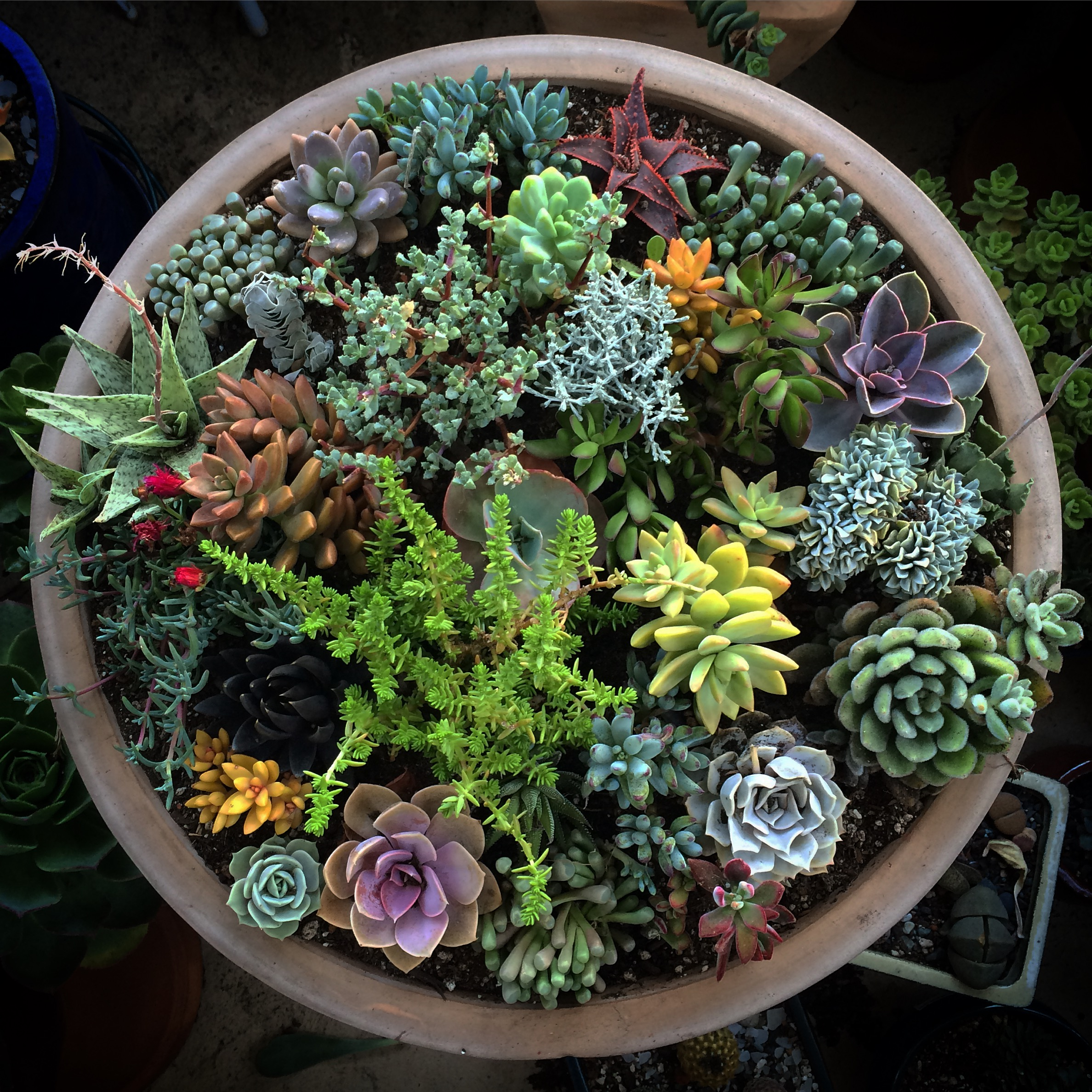 Container planter representing 13 distinct genera of succulent plants from Mexico, South Africa, andAustralia.