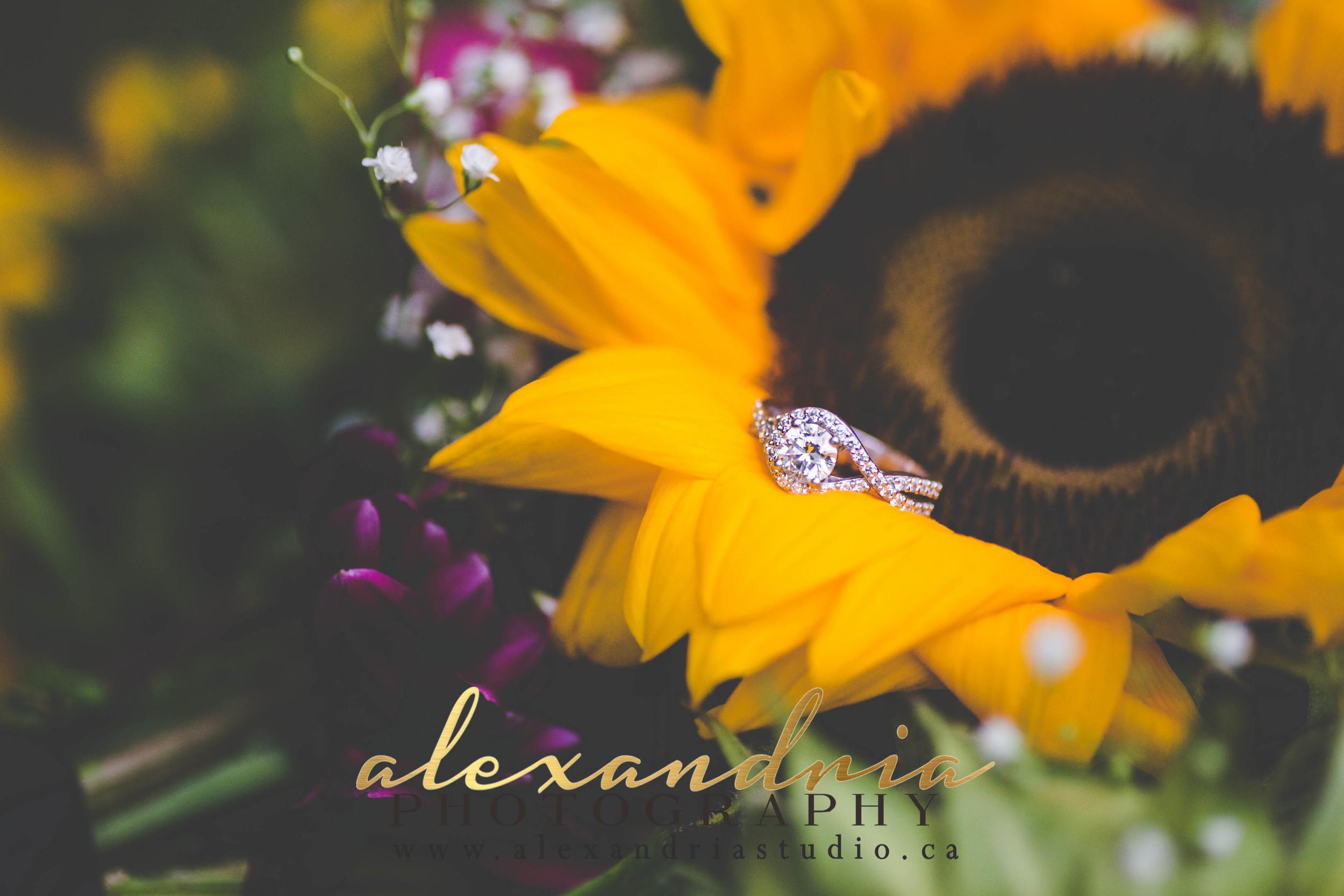 AlexandriaPhotography15 0961.jpg